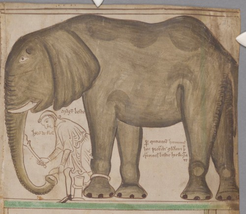 Henry III's Elephant by Matthew Paris (CCCC MS 16, f. ivr)